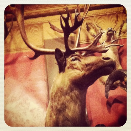 """It's what's for dinner."" Animals line the walls of the Buckhorn Exchange."